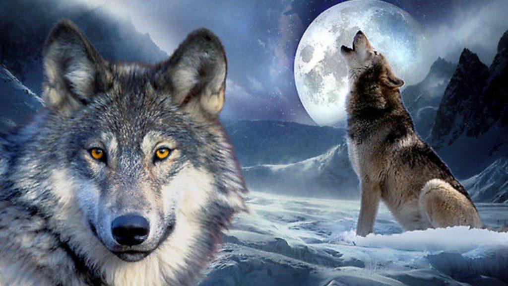 Cuentos infantiles y lobos im genes y fotos - Animales salvajes apareandose ...