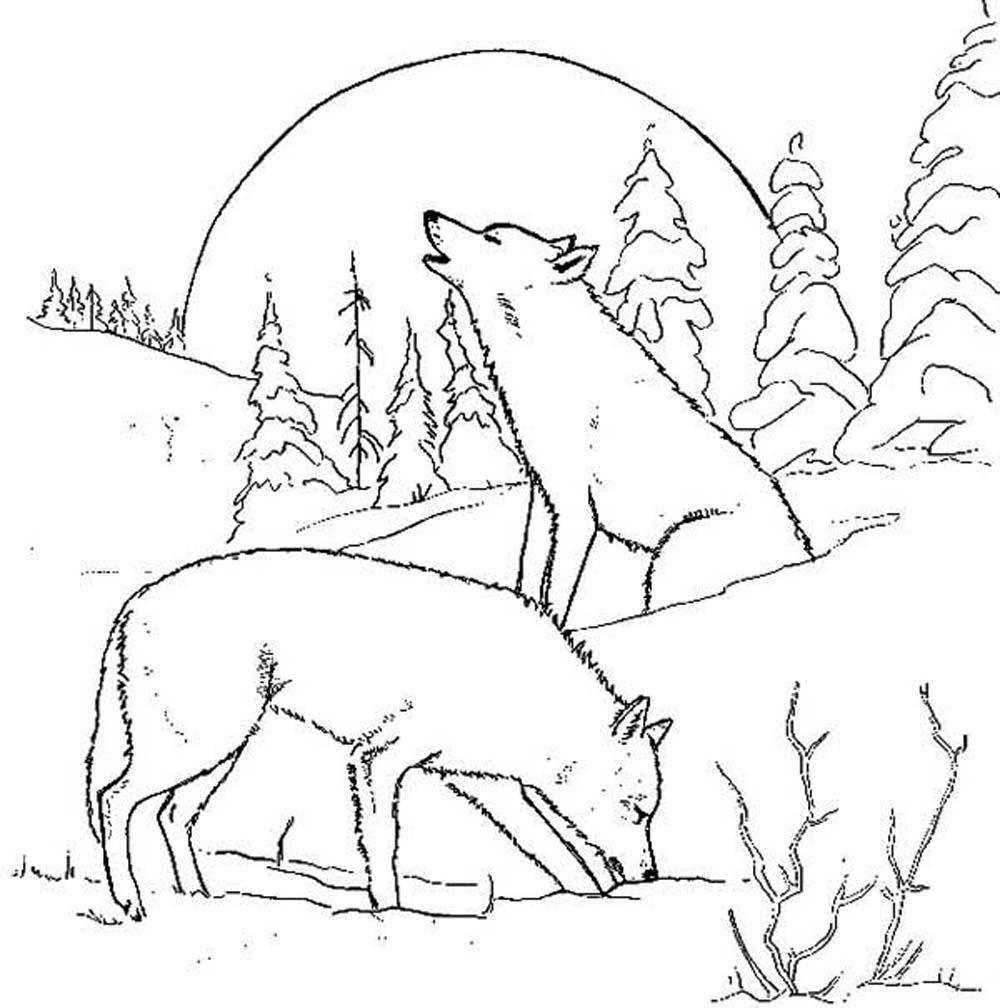 Dibujo de lobo con luna llena  Imgenes y fotos