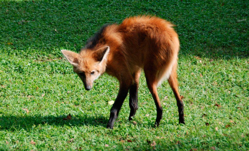 Lobos Wiki:Las Mejores Imágenes